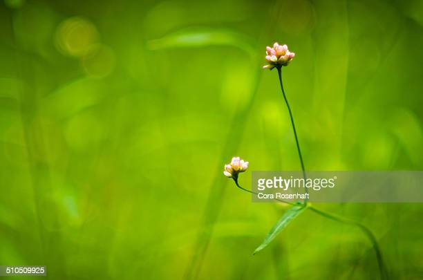 Lone Wildflower