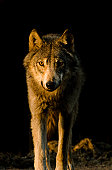 Lone Wolf Approaches