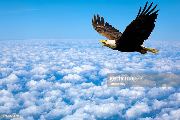 Solitude au-dessus et de Bald Eagle King of The Sky