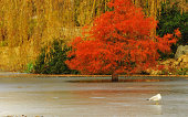 Lonely autumn on frozen lake