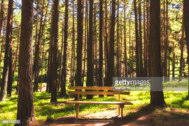 A lonely bench in the middle of the forest