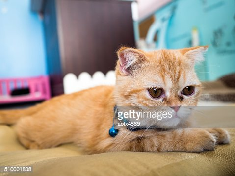 lonely cat in colorful blur background,select focus : Stock Photo