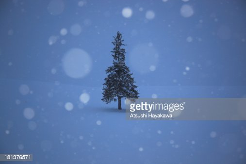 A lonely Christmas Tree : Stock Photo