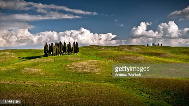 Lonely cypresses in tuscany