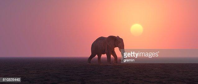 Lonely elephant walking in barren landscape