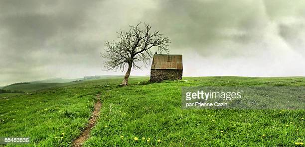 Lonely House and Tree in Spring