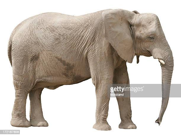 A lonely looking elephant all by himself