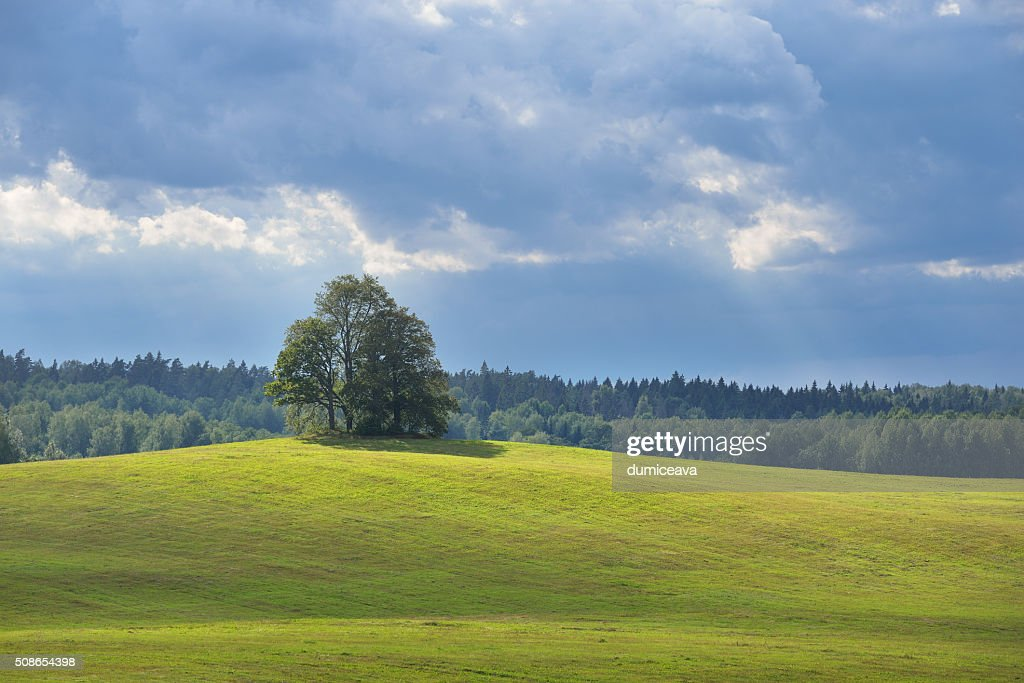 Lonely oak trees in the field on the hills : Stock Photo