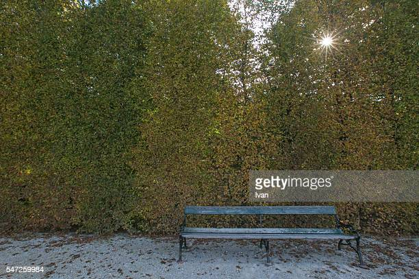 A Lonely Old Bench Front of Yellow and Red Leaf Wall