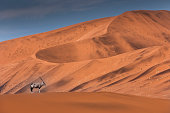 Lonely Oryx over dune in Sossusvlei, Namibia