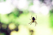 Lonely predatory spider on real web on background of nature in summer