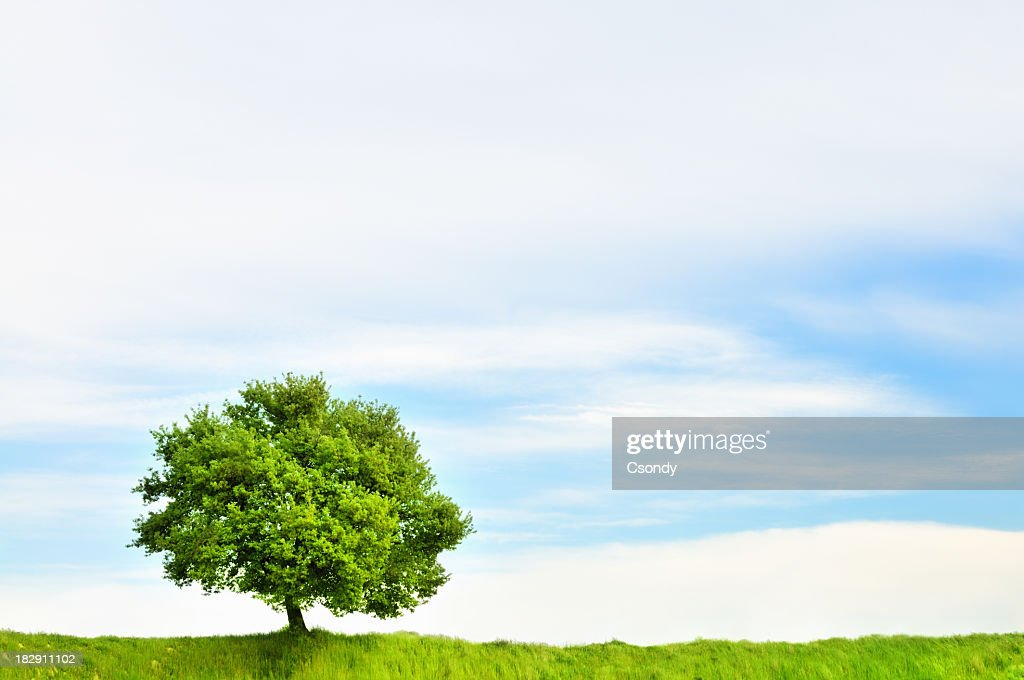 Lonely tree and green field : Stock Photo