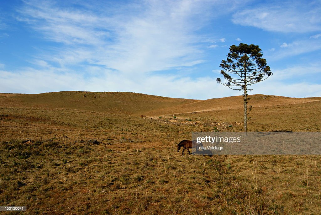 Lonely tree and horse : Stock Photo