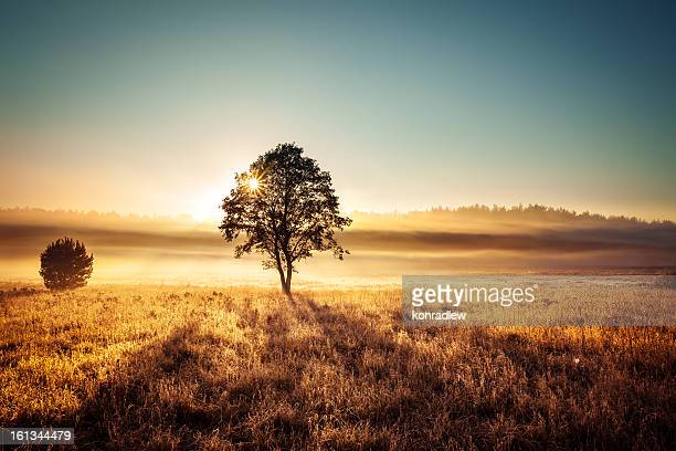 Árvore solitária ao pôr do sol e sol Paisagem com nevoeiroweather forecast