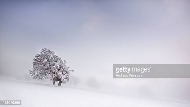 Lonely tree during winter