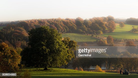 Lonely Tree in a park : Stock Photo
