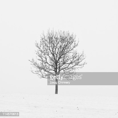 Lonely tree in snow : Stock Photo