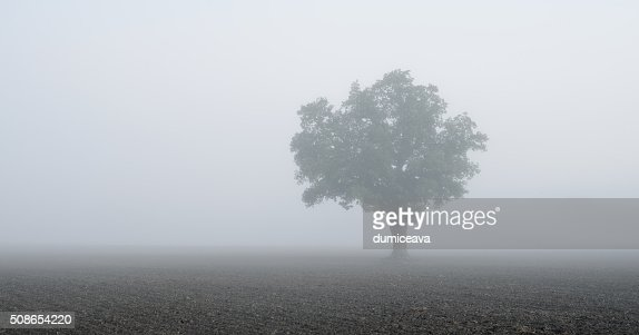 lonely tree in the field in very strong fog : Stock Photo