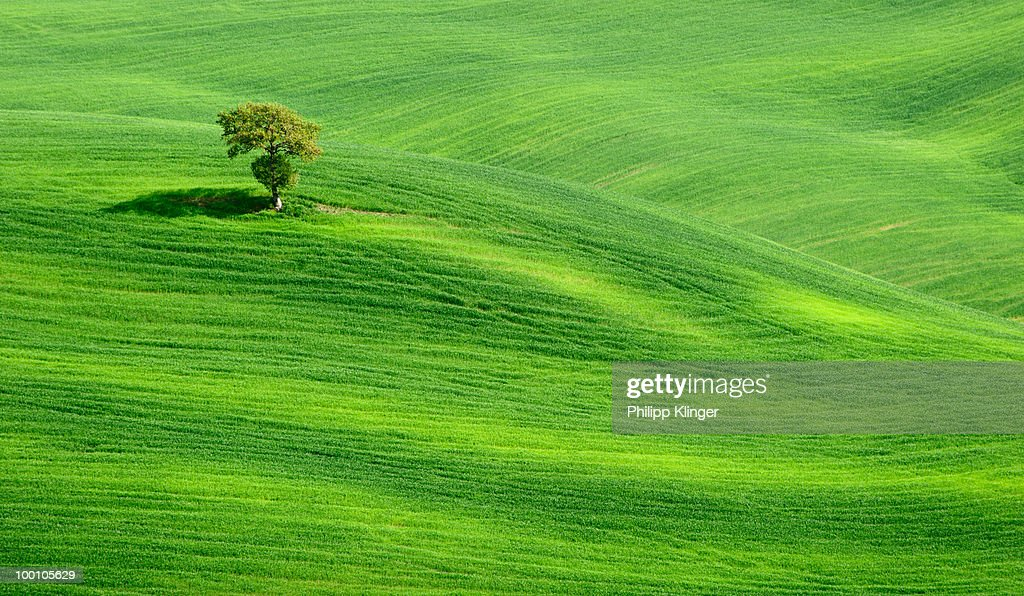 Lonely Tree on green hills in Tuscany : Foto de stock