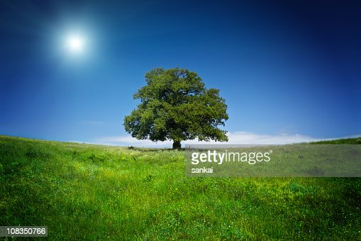 Lonely tree : Stock Photo