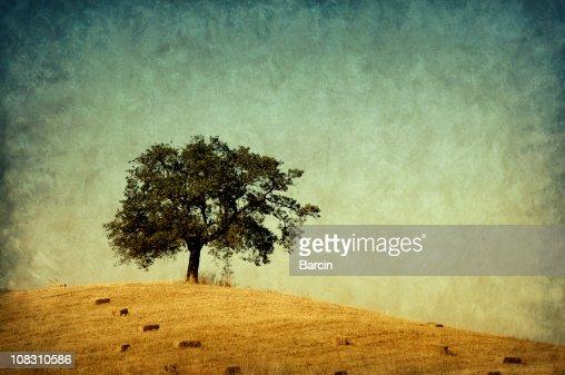 Lonely tree, retro-style photo : Stock Photo