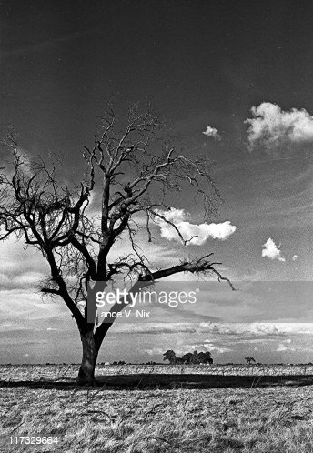 Lonely tree, Rural Fresno County : Stock Photo