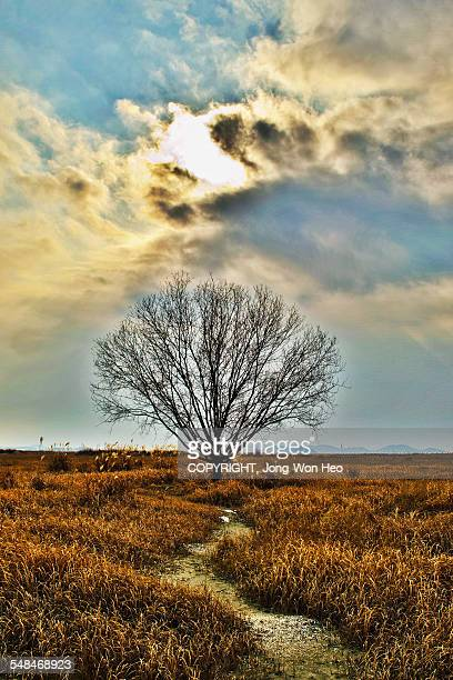 A lonely tree under sun