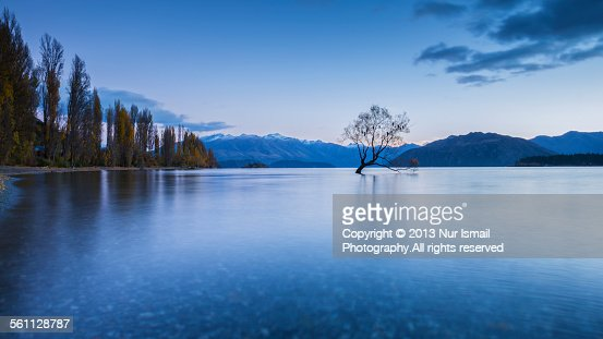 Lonely Tree Wanaka - Sunrise