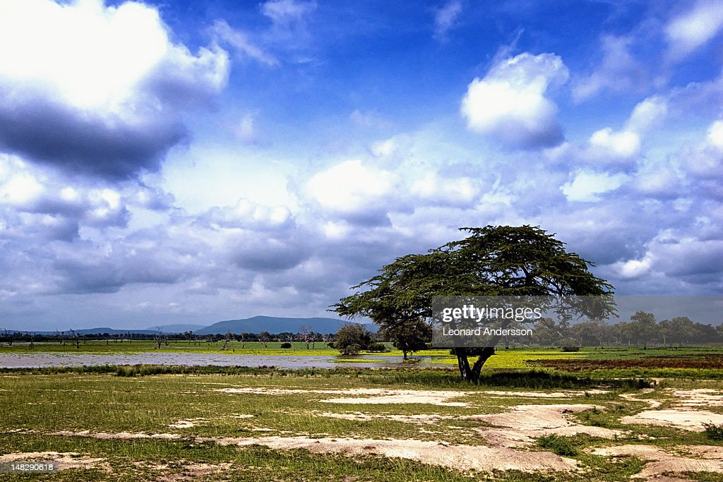 Lonely tree with cloud formation : Stock Photo