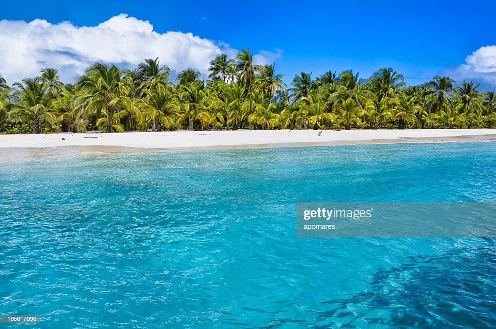 Tropical island turquoise beach with coconut trees : Stock Photo