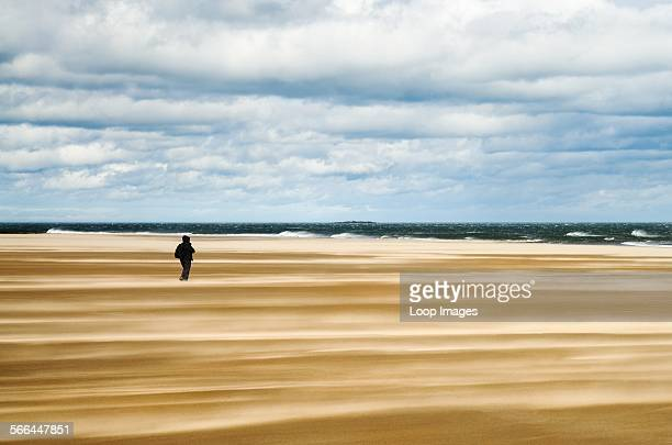 A lonely walker on the beach between Bamburgh and Seahouses