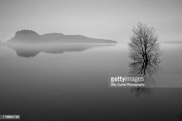 Lonely winter tree, Loch Lomond