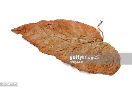 Lonely yellow leaf, isolated on a white background : Stockfoto