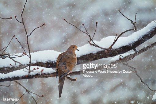 Lonesome Dove