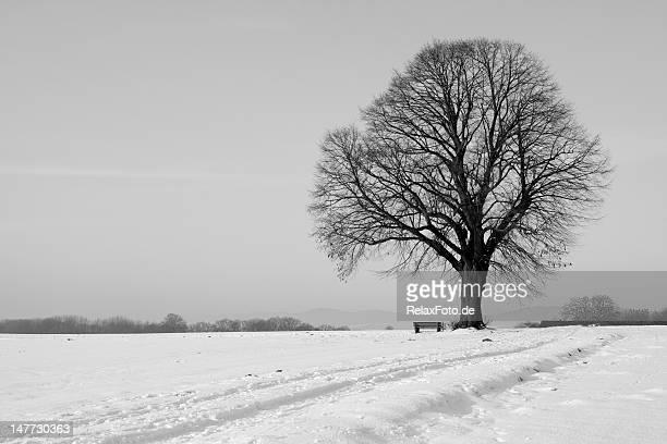 Lonesome single tree with bench on field in winter (XXXL)