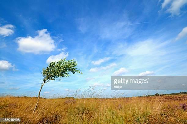 Arbre solitaire battu par le vent