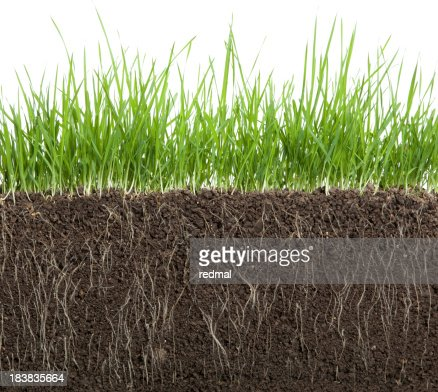 long grass and soil