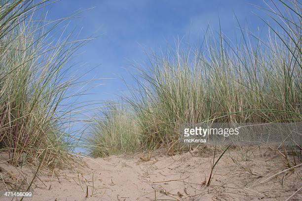 Long grass, sand and sky