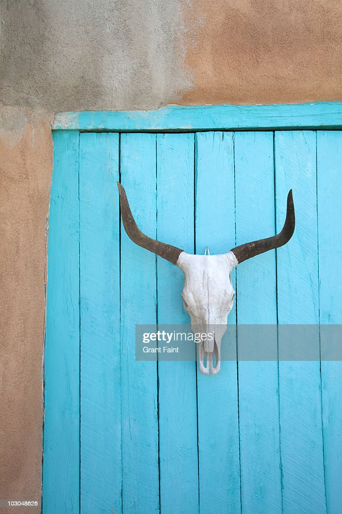 Long horn cow skull on wall.