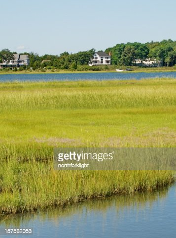 Long Island, NY wetland