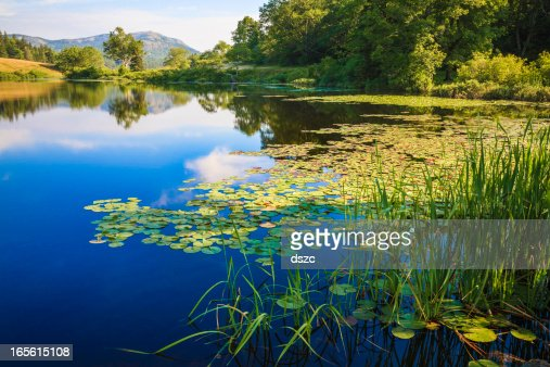 Wet Area Stock Photos And Pictures Getty Images