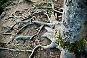 Long roots