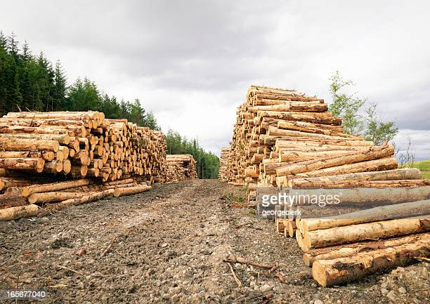 De longues rangées de coupe en bois