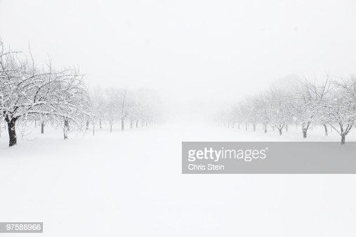 Long Rows of Snow  : Stock Photo