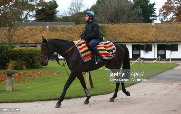 Long Run in the excersice yard at Seven Barrows Lambourn