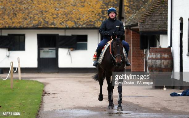 Long Run in the exercise yard at Seven Barrows Lambourn