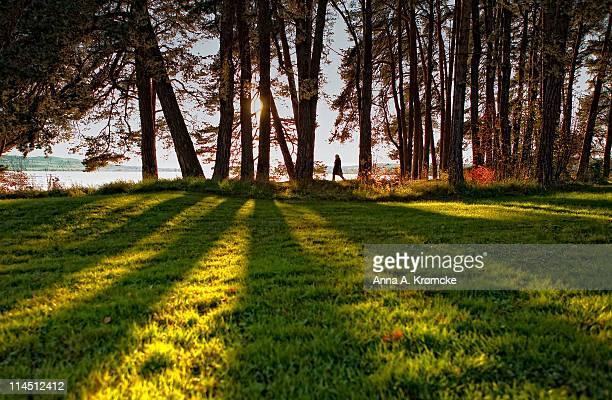 Long shadows and lake