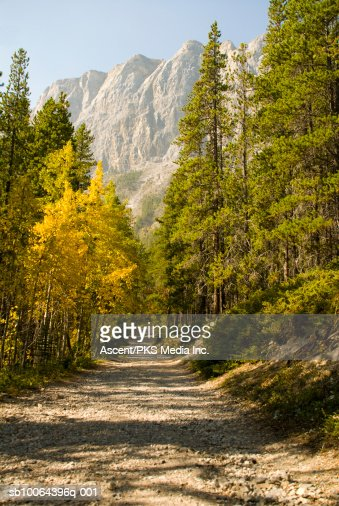 Long straight path through forest in mountains : Stock Photo