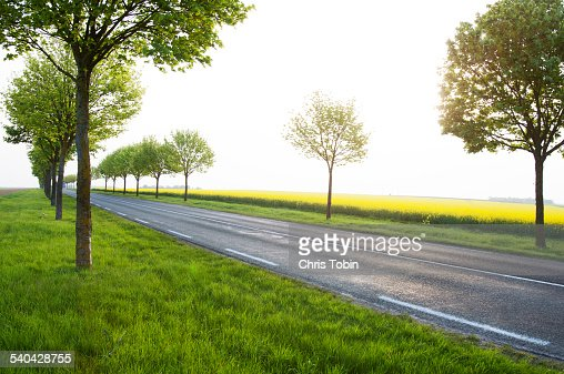 long street lined with trees near rapeseed field
