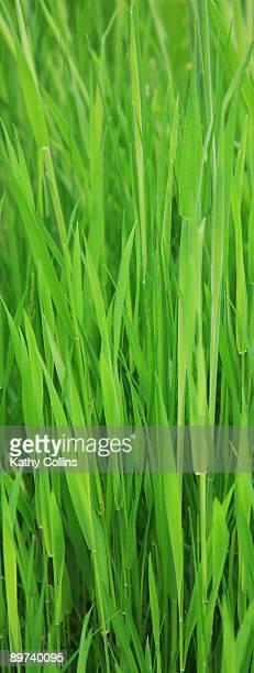 Long sunlit meadow grass